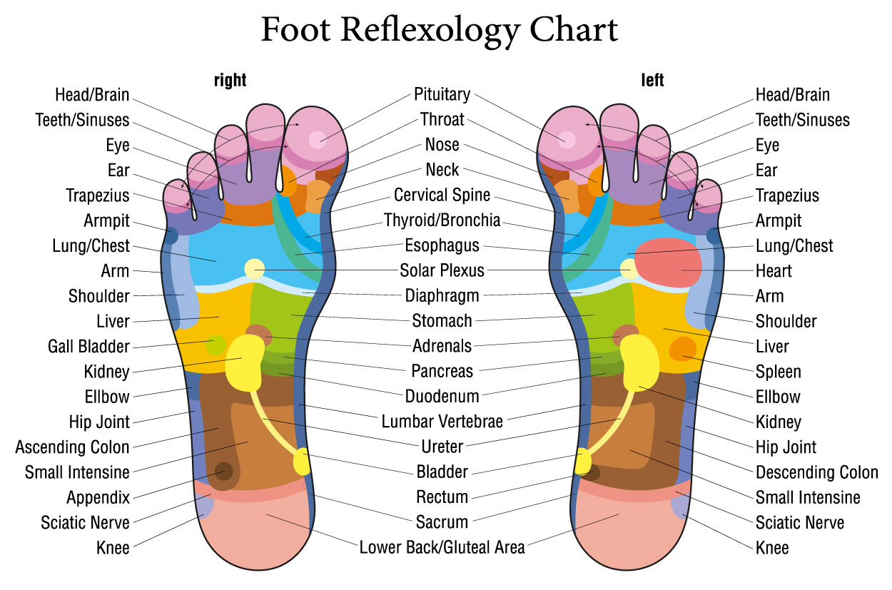 Foot Reflexology Chart of Foot Reflex Points